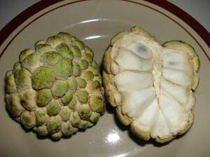 Annona squamosa (аннона чешуйчатая)  Custard Apple,Аннона сахарная